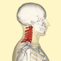 spinal cord injury bdah